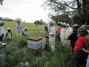 Beekeeping workshop at Wholearth