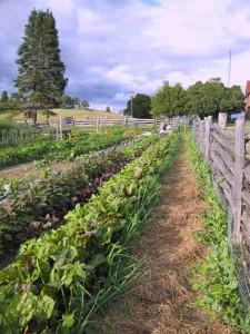 Farm garden1